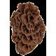 Maïtaké BIO (Maï-Ta-Ké) en gélules (Grifola frondosa)
