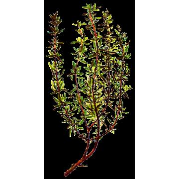 https://www.abcdelanature.com/3216-thickbox/huile-essentielle-thym-linalol-provence-bio.jpg