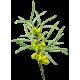 Huile végétale Argousier Vierge Bio*