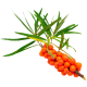 Huile végétale Vierge Argousier Bio*