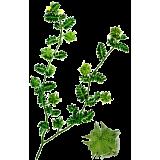 Tribulus terrestris Bio en gélules (aphrodisiaque naturel)