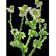 Camomille Matricaire fleurs BIO en gélules