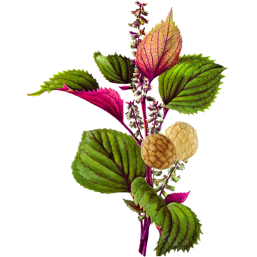 Huile végétale Périlla Vierge Bio*