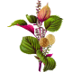 Huile végétale vierge de Périlla Bio*