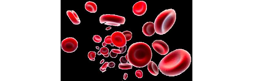 Sang sucres & cholestérol