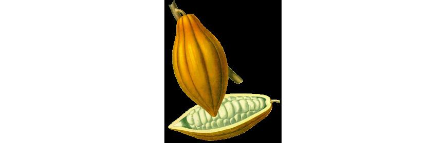 Beurres végétaux bio