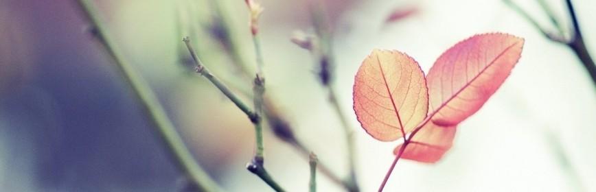 Traitements naturels par les plantes m dicinales abc de for Acheter des plantes par internet