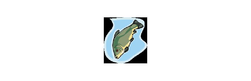Capsules de la mer