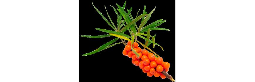 Plantes à Vitamines