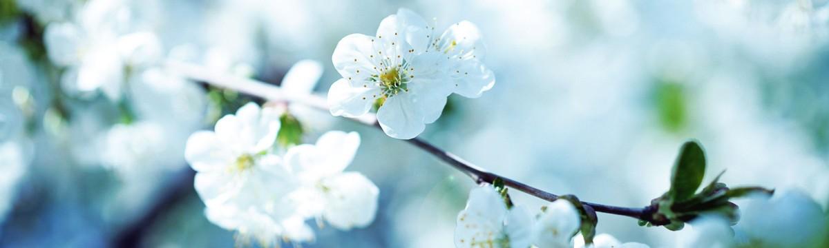 L'Aromathérapie : Visitez notre fabuleux rayon aromathérapie..